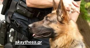 Ομάδα Κ9: Οι τετράποδοι αστυνομικοί που μυρίζονται τα εγκλήματα και όχι μόνο…! (φωτογραφίες)